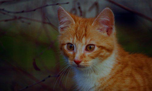 close up of orange cat