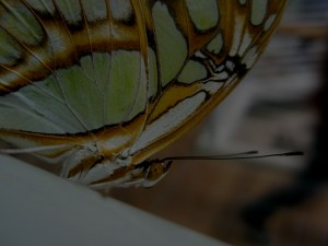 close view of butterfly