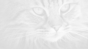 close up of cat face with white overlay