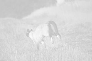 tabby cat running on long grass