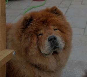 dog staring at camera