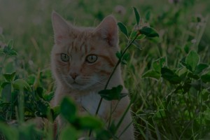 nature-cat-field-meadow-grass