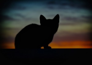 cat-animals-backlight-pet-cats