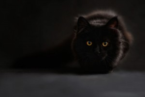 brown black cat with yellow eyes staring at front