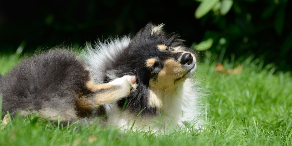 scratching puppy in grassy area
