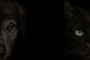portrait of dog and cat eye on black background