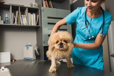pet emergency