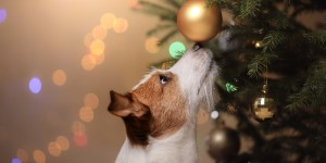 Holiday Hazards That Could Land Your Pet in the Emergency Room